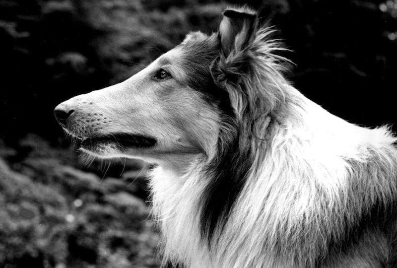 I cani, star del cinema