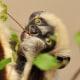 Il Koala, il simpatico dormiglione australiano! / Image 8
