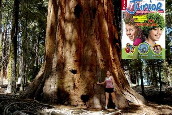 Lo sapevi che | Qual è l'albero più alto del mondo?