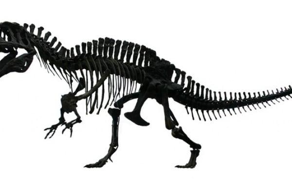 Scoperta in Abruzzo la più grande orma di dinosauro rinvenuta finora in Italia!
