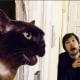 Gatto (e padrone) ricreano scene famose di film (FOTO) / Image 4