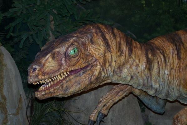 Velociraptor: com'era fatto davvero?