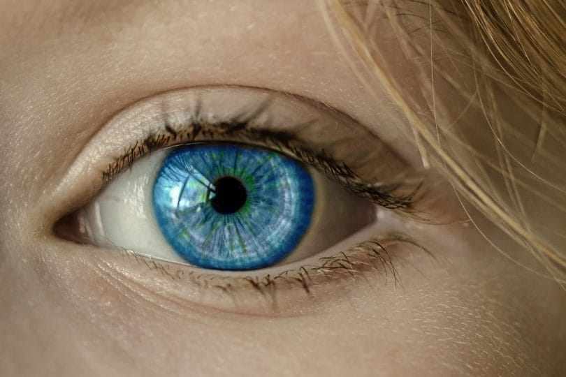 Come funzionano l'occhio e la vista