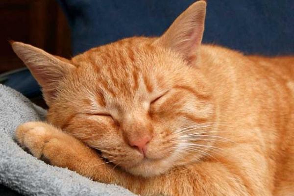 È il gatto il vero migliore amico dell'uomo?