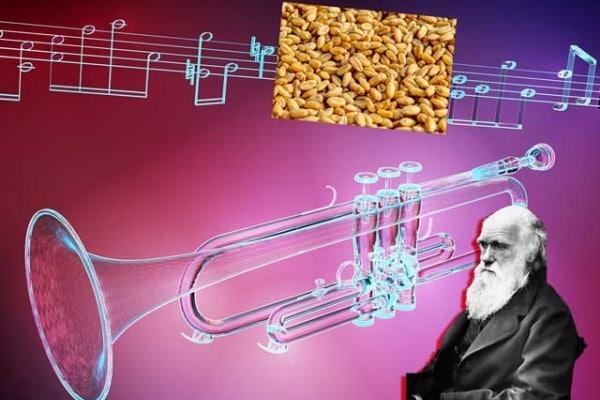 Qual è stato il primo strumento musicale?