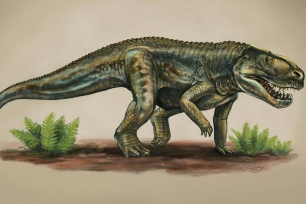 Studentessa scopre specie di rettile estinto 212 milioni di anni fa!