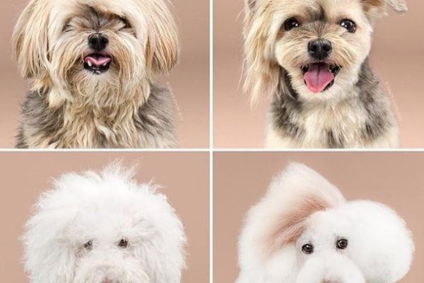 Anche i cani vanno dall'hair stylist! (FOTO)