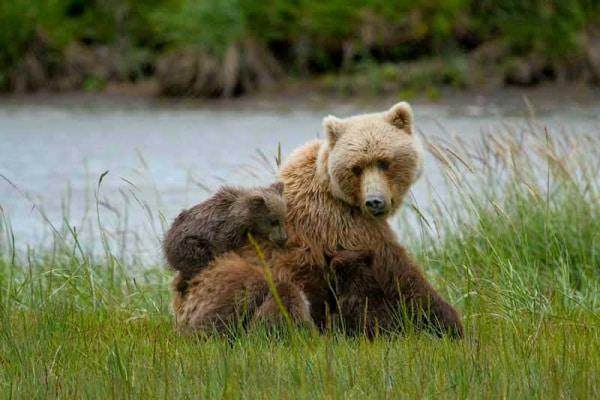 Gli orsi e il letargo: è il momento di svegliarsi!