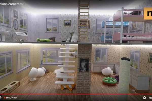 Kattarshian, il reality show su gattini di 9 mesi