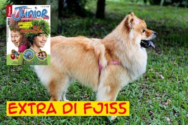 La classifica dei 10 cani più pigri del mondo