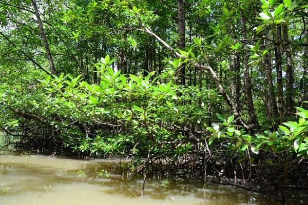 Che cos'è l'ecosistema?