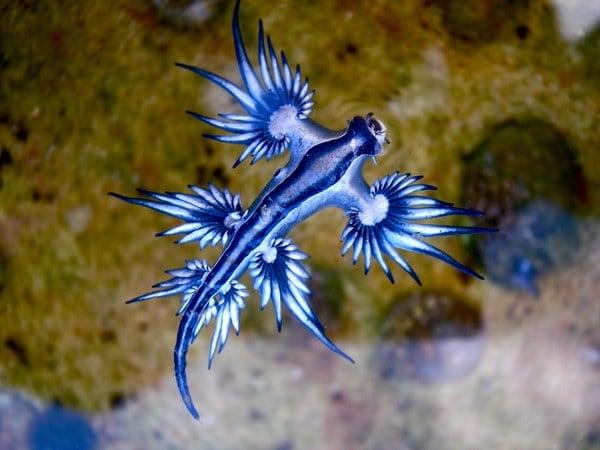 I Nudibranchi, veri Pokémon del mare!