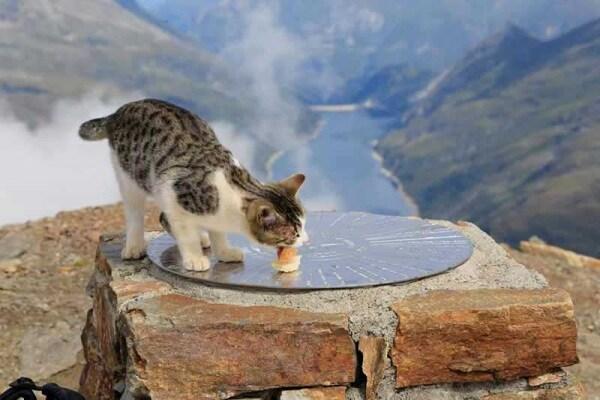 Mici amici | Storia di Orione il gatto alpinista!