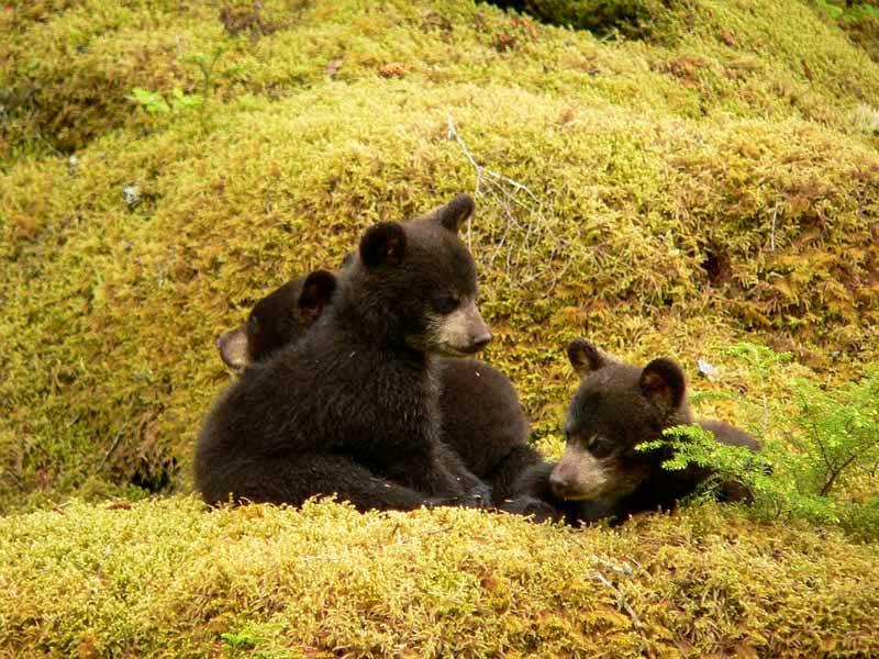 nero orso sesso
