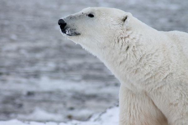 Allarme WWF: in 40 anni dimezzata la popolazione animale!