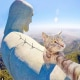 Selfie... da gatto! Gli autoscatti del micio Manny / Image 11