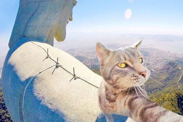 Selfie… da gatto! Gli autoscatti del micio Manny