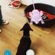 Pokémon Go | Occhio a truffe e imitazioni! / Image 3