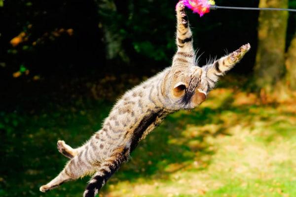 Buffissimi animali che saltano