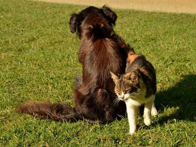 Cane O Gatto Chi è Il Più Intelligente Focus Junior