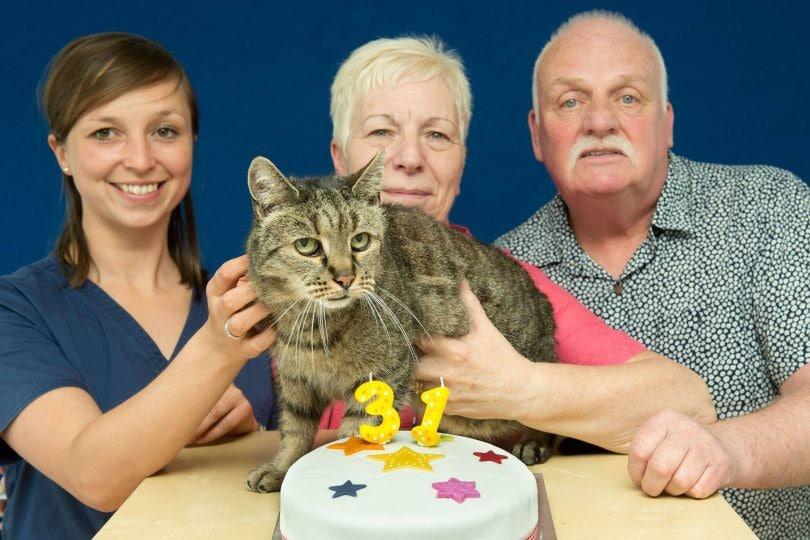 Nutmeg, il gatto più vecchio del pianeta, ha appena compiuto 31 anni