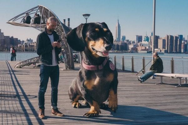 Le avventure di Vivian, un piccolo cane che si crede un gigante!