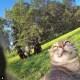 Selfie... da gatto! Gli autoscatti del micio Manny / Image 10