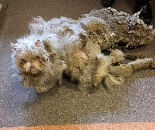 Sinbad, il gatto che si portava 5 chili di spazzatura addosso!