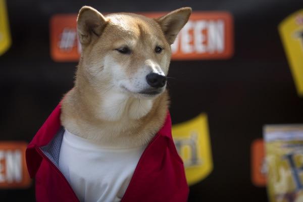 """Originale """"Dog Parade"""" viene organizzata per Halloween ogni anno a New York"""