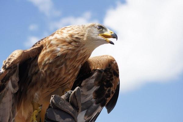 Lo sapevi che | Anche gli uccelli si arrabbiano!