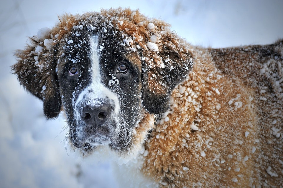 curiosità sui cani