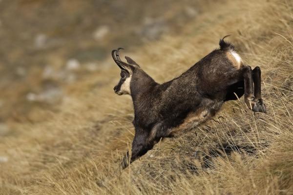 Impara a fotografare gli animali con Focus Wild