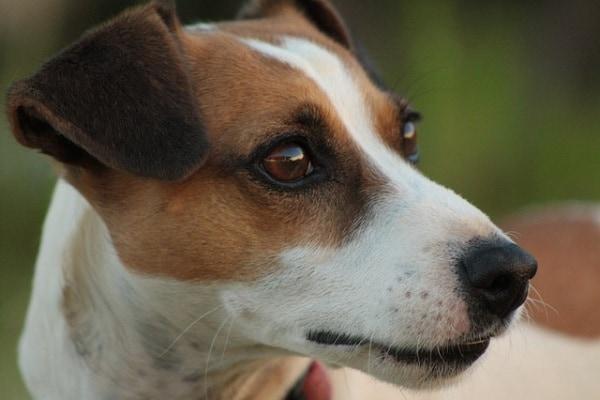 18 nomi per cani… davvero FAMOSI!