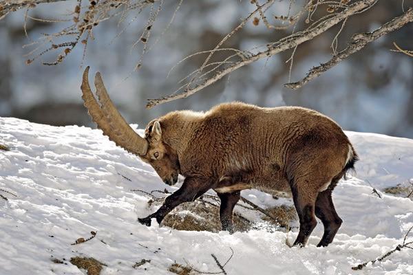 Corso di fotografia naturalistica di Focus Wild: il programma