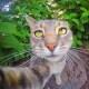 Selfie... da gatto! Gli autoscatti del micio Manny / Image 8