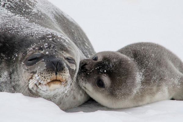 Curiosità animali | 10 fatti sulla foca