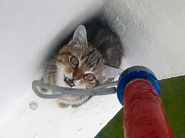 Un micio piccola peste si caccia nei pasticci al 12esimo piano!