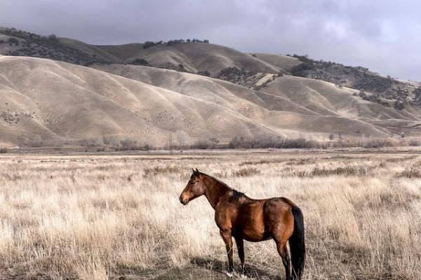 Che differenza c'è tra la steppa, la taiga e la tundra?
