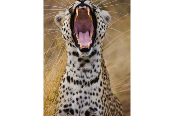 Leopardo | Gallery