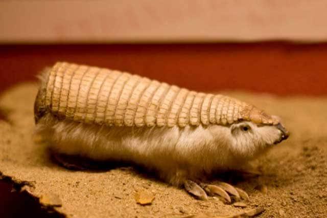 Curiosità animali | Gli animali più strani del mondo