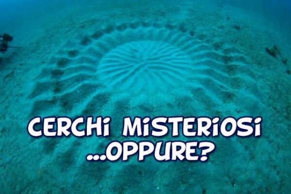 Curiosità animali | Il mistero dei cerchi sul fondo del mare
