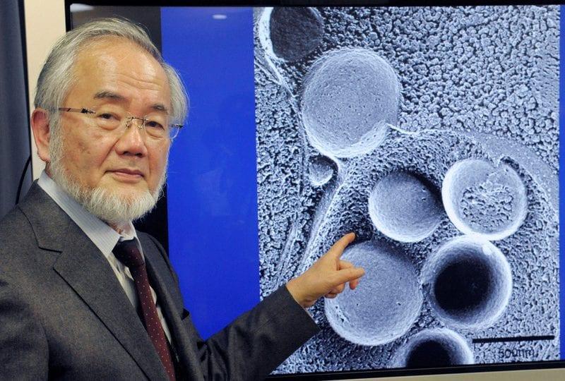 Allo scienziato giapponese Yoshinori il Nobel per la medicina