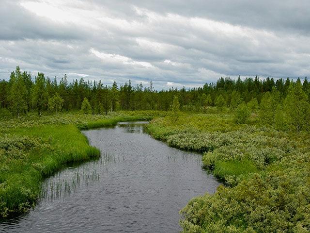 Steppa, tundra e taiga