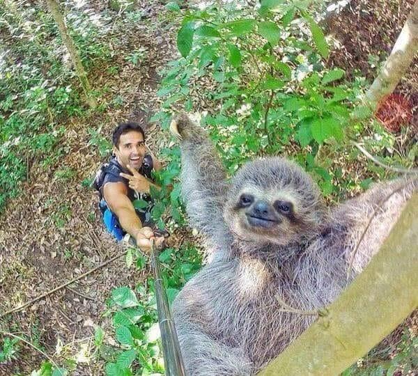 Selfie col bradipo!