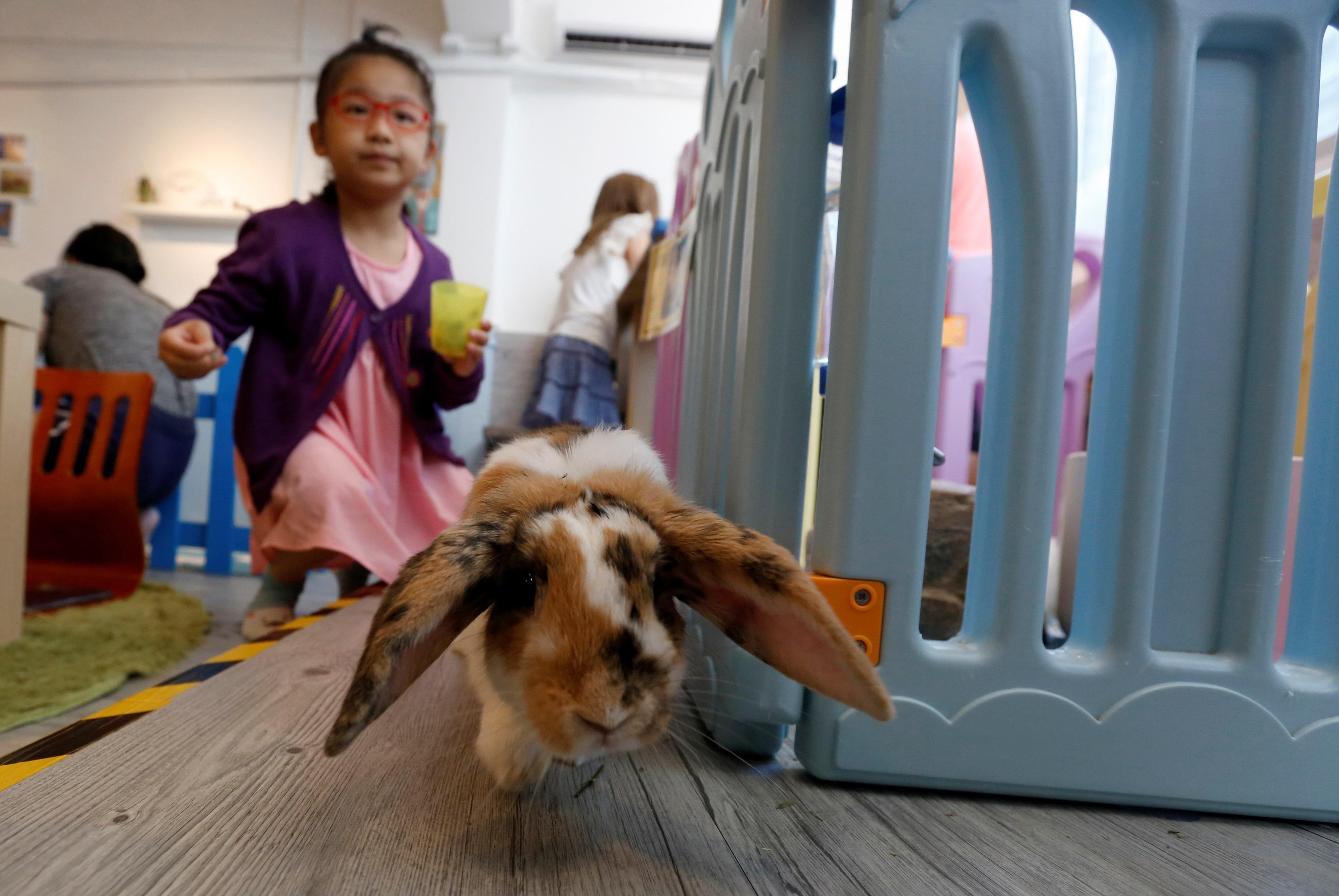 Rabbitland cafè, il nuovo bar dei coniglietti a Hong Kong
