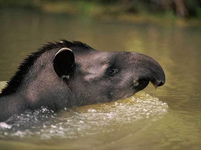 Curiosità animali | …Che naso!