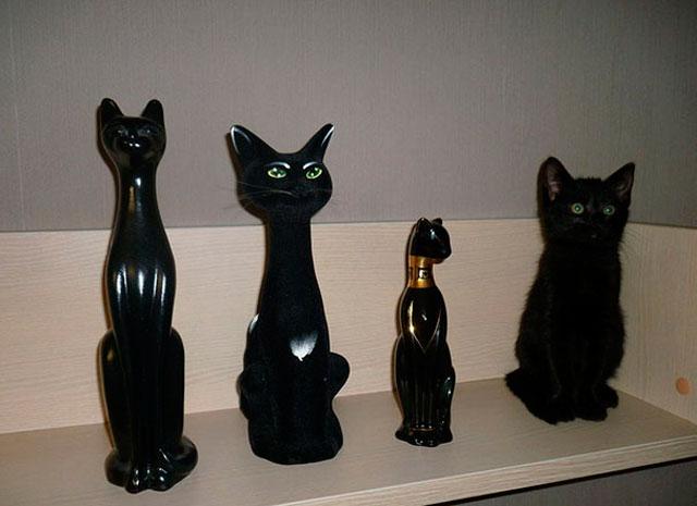 Gatti nascosti: trovali nella fotogallery!