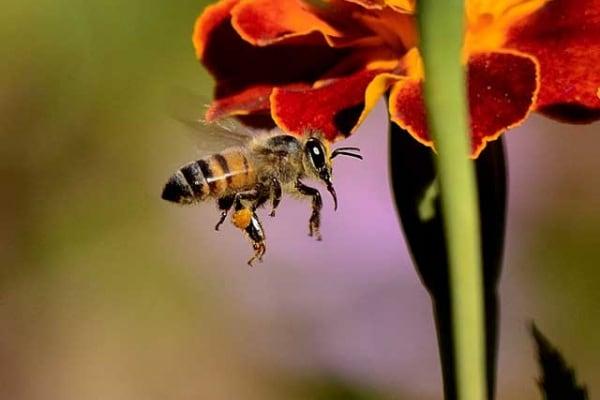 Le api invadono New York. E tutti sono contenti!