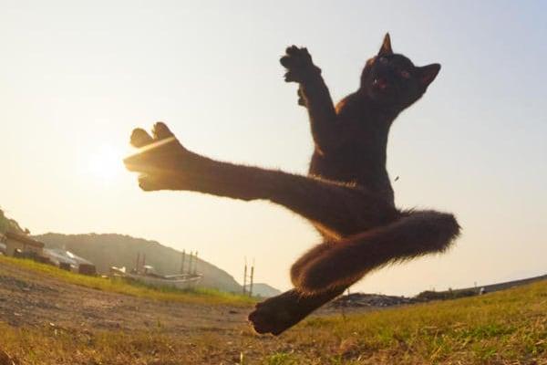Le foto pazze dei Gatti Kung-Fu!