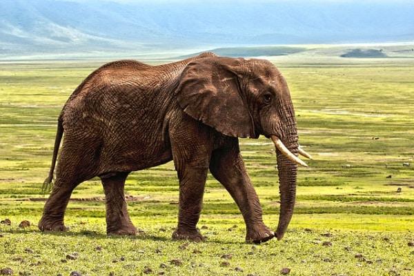 Secondo gli scienziati stiamo vivendo la sesta estinzione di massa. Il mondo animale è a rischio